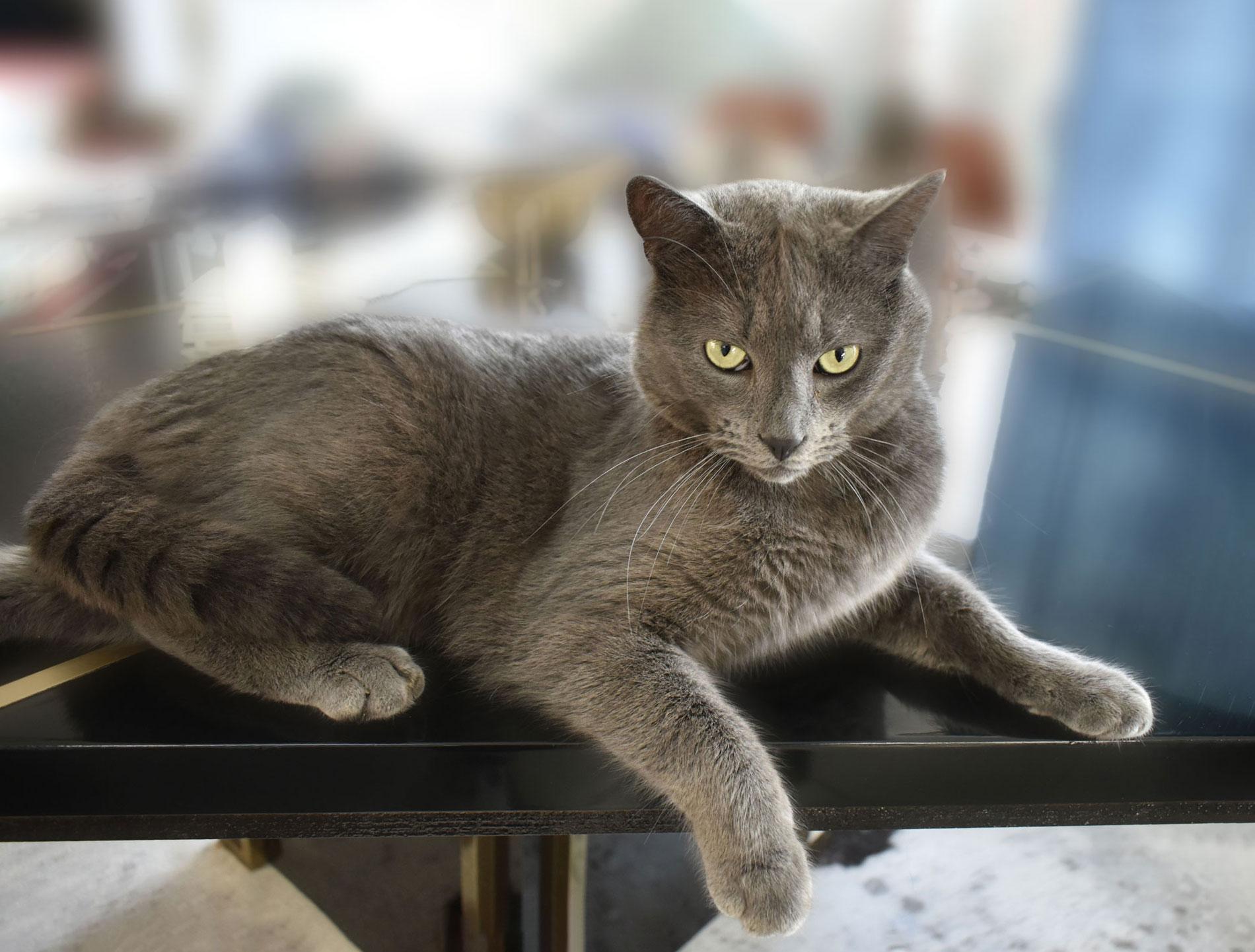 les-sens-de-nelumbo-chat-bien-etre-animal