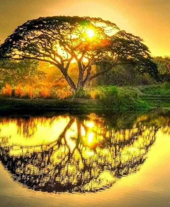 Les-sens-de-nelumbo-arbre-meditation-ateliers-collectifs